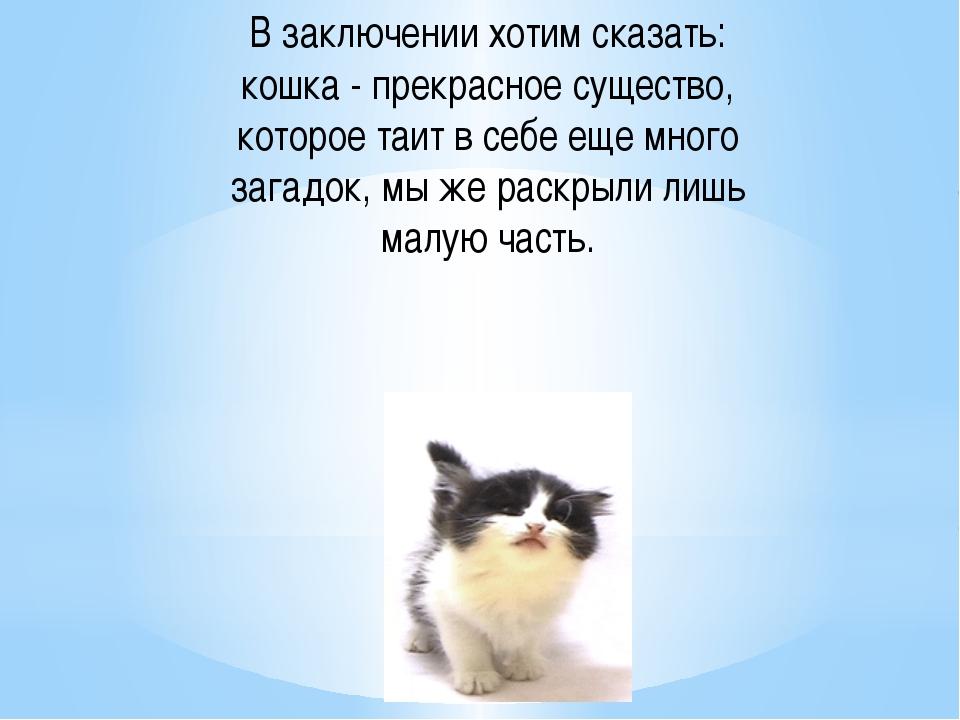 В заключении хотим сказать: кошка - прекрасное существо, которое таит в себе...