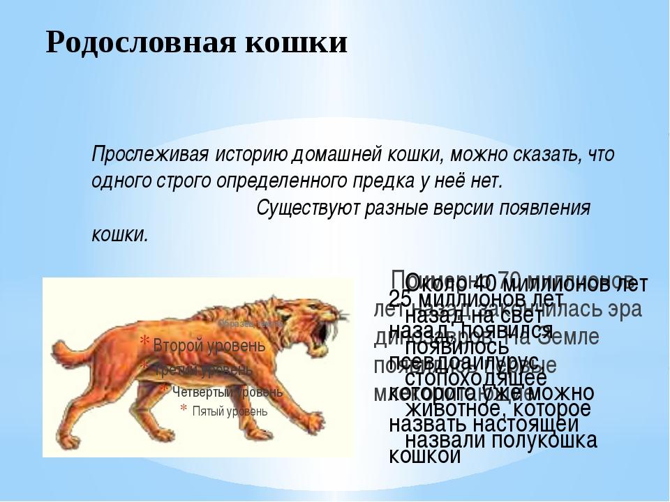 Родословная кошки Примерно 70 миллионов лет назад закончилась эра динозавров....