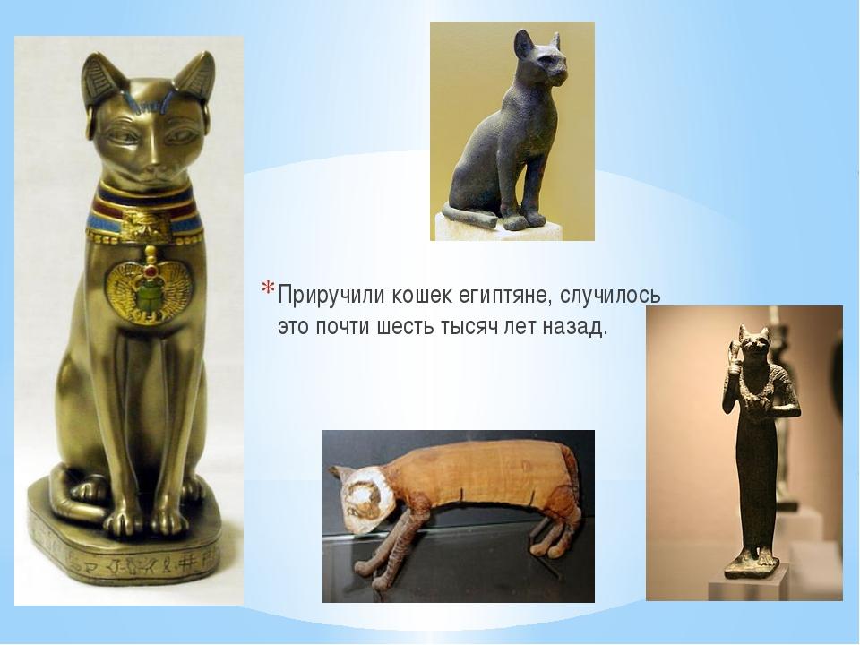Приручили кошек египтяне, случилось это почти шесть тысяч лет назад.