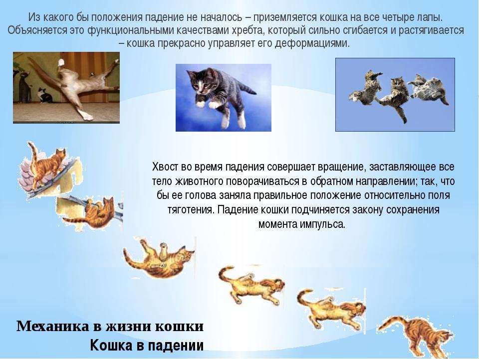 Механика в жизни кошки Кошка в падении Из какого бы положения падение не нача...