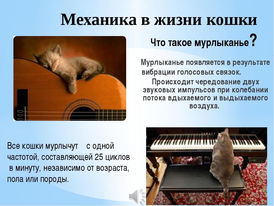 Механика в жизни кошки Что такое мурлыканье? Мурлыканье появляется в результа...