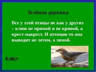 Зелёная дорожка Все у этой птицы не как у других – клюв не прямой и не криво