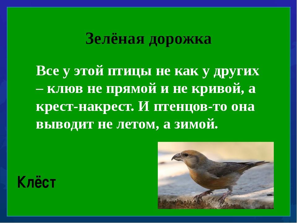 Зелёная дорожка Все у этой птицы не как у других – клюв не прямой и не криво...