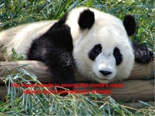 The Giant Panda is among the world's most adored and protected rare animals