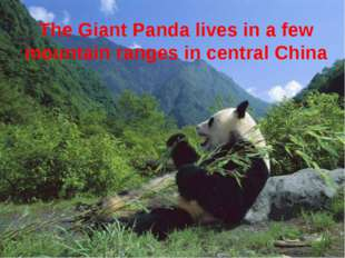 The Giant Panda lives in a few mountain ranges in central China