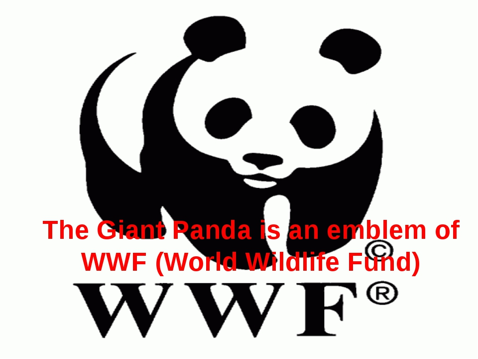 The Giant Panda is an emblem of WWF (World Wildlife Fund)