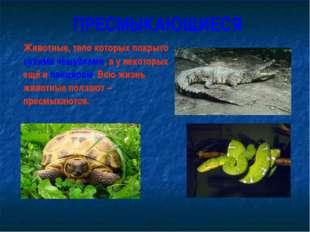ПРЕСМЫКАЮЩИЕСЯ Животные, тело которых покрыто сухими чешуйками, а у некоторы