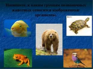 Напишите, к каким группам позвоночных животных относятся изображенные организ
