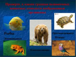 Проверте, к каким группам позвоночных животных относятся изображенные организ