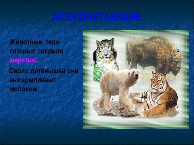 МЛЕКОПИТАЮЩИЕ Животные, тело которых покрыто шерстью. Своих детёнышей они в...