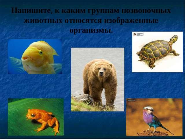Напишите, к каким группам позвоночных животных относятся изображенные организ...