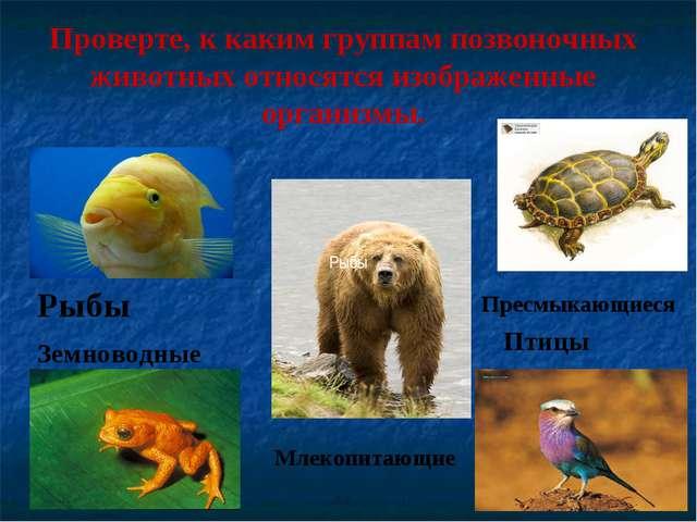 Проверте, к каким группам позвоночных животных относятся изображенные организ...