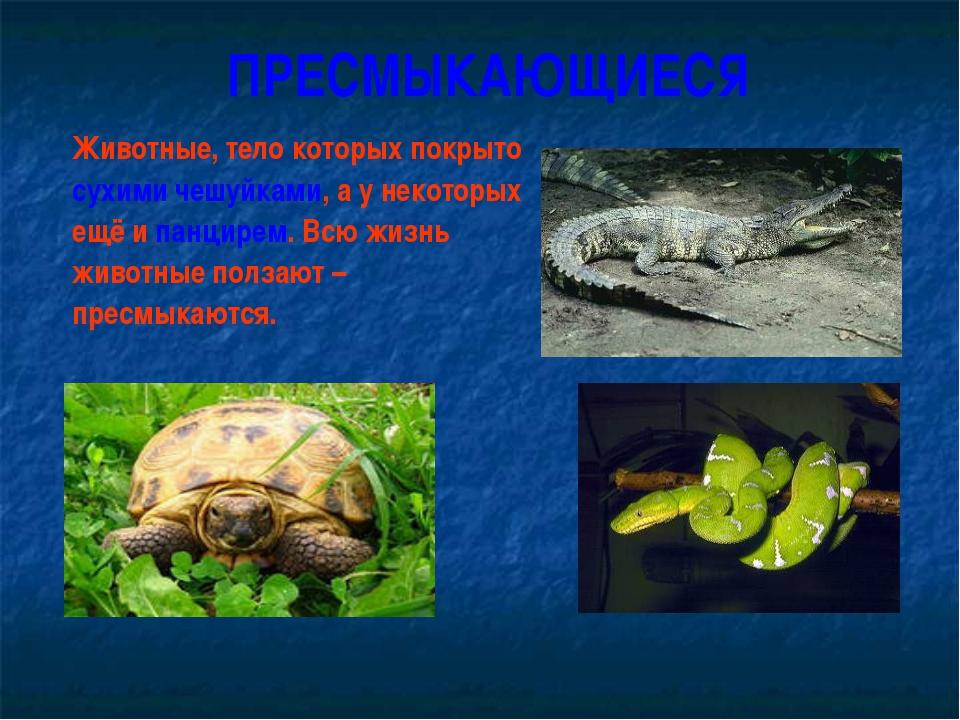 ПРЕСМЫКАЮЩИЕСЯ Животные, тело которых покрыто сухими чешуйками, а у некоторы...