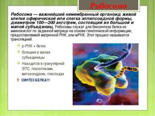 Рибосома — важнейший немембранный органоид живой клетки сферической или слегк
