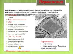 Пероксисома— обязательная органелла эукариотической клетки, ограниченная мемб