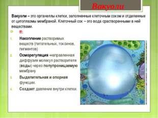 Вакуоли – это органеллы клетки, заполненные клеточным соком и отделенные от ц