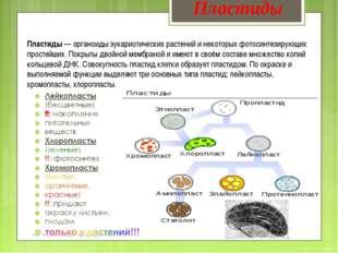 Пластиды— органоиды эукариотических растений и некоторых фотосинтезирующих п
