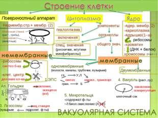 Надмембр.стр.+ мембр. (2) Клеточная стенка (раст., грибы), гликокаликс (живот