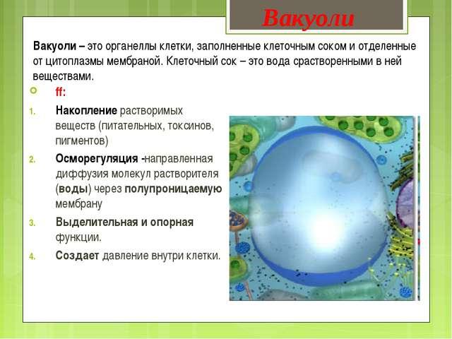 Вакуоли – это органеллы клетки, заполненные клеточным соком и отделенные от ц...