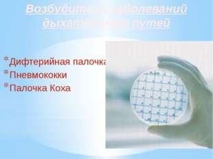 Возбудители заболеваний дыхательных путей Дифтерийная палочка Пневмококки Пал