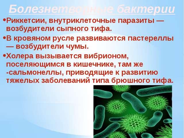 Болезнетворные бактерии Риккетсии, внутриклеточные паразиты — возбудители сып...