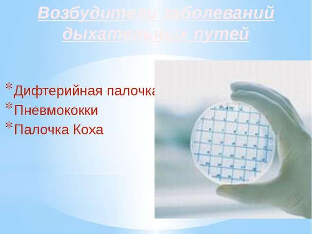 Возбудители заболеваний дыхательных путей Дифтерийная палочка Пневмококки Пал...