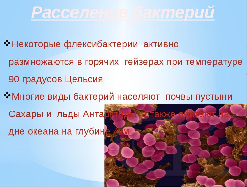 Расселение бактерий Некоторые флексибактерии активно размножаются в горячих г...