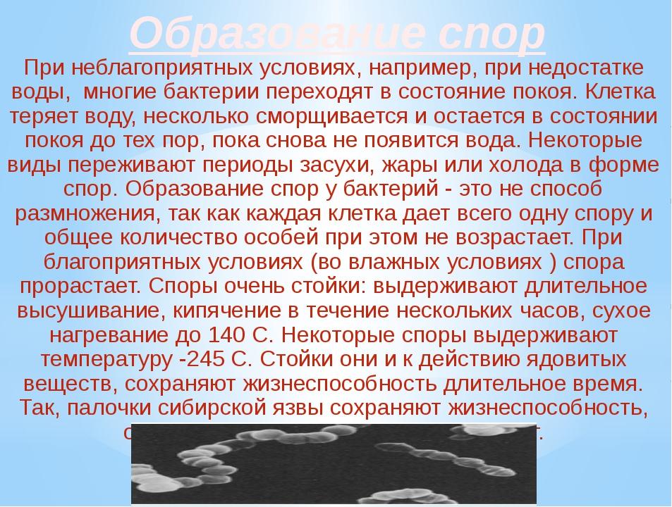 Образование спор При неблагоприятных условиях, например, при недостатке воды,...