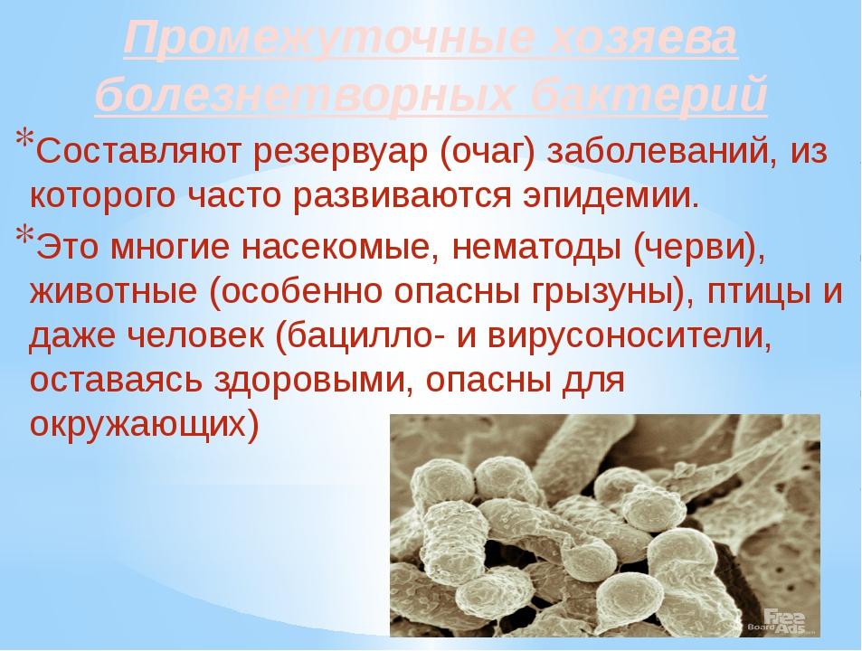 Промежуточные хозяева болезнетворных бактерий Составляют резервуар (очаг) заб...