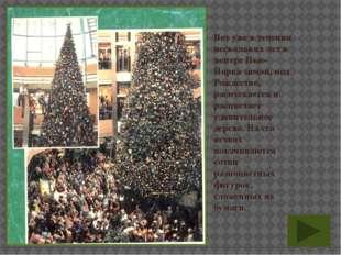 Вот уже в течении нескольких лет в центре Нью-Йорка зимой, под Рождество, рас