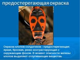 Окраска клопов-солдатиков - предостерегающая: яркая, броская, резко контрасти