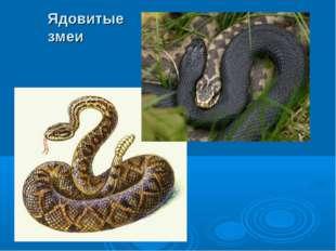 Ядовитые змеи
