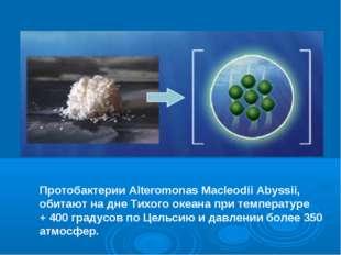 Протобактерии Alteromonas Macleodii Abyssii, обитают на дне Тихого океана при