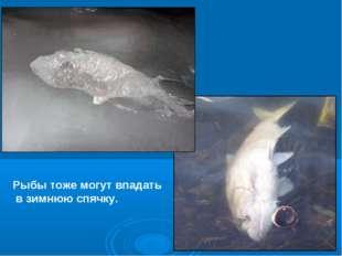 Рыбы тоже могут впадать в зимнюю спячку.
