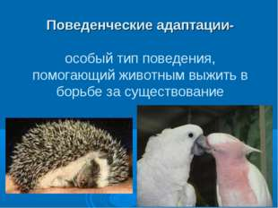 Поведенческие адаптации- особый тип поведения, помогающий животным выжить в б