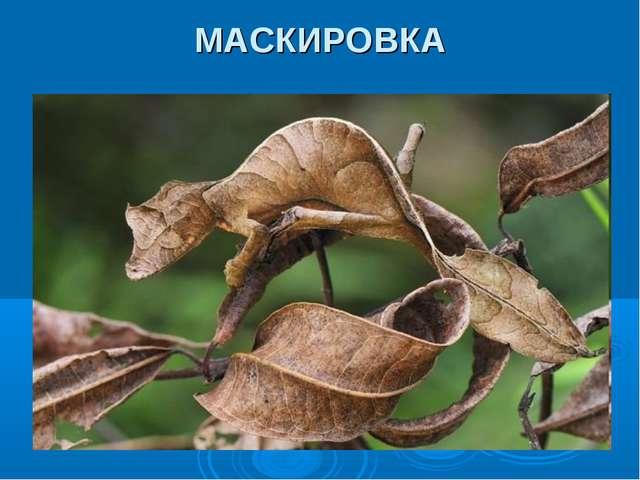 МАСКИРОВКА