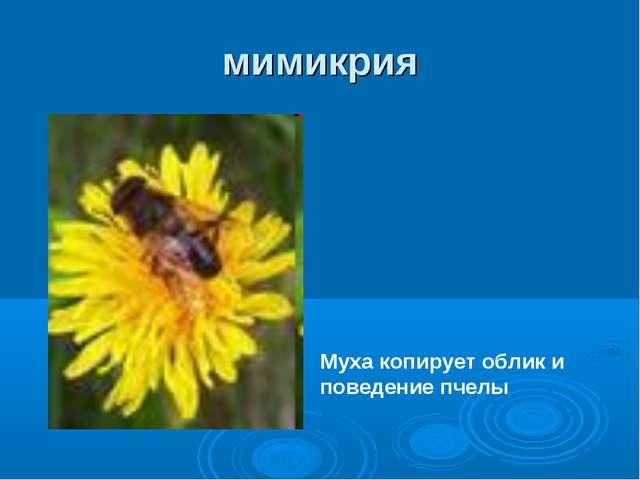 мимикрия Муха копирует облик и поведение пчелы