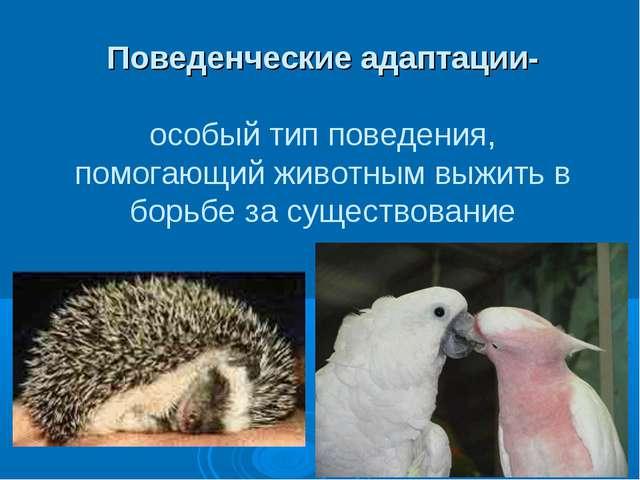 Поведенческие адаптации- особый тип поведения, помогающий животным выжить в б...