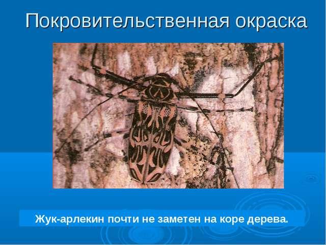 Жук-арлекин почти не заметен на коре дерева. Покровительственная окраска