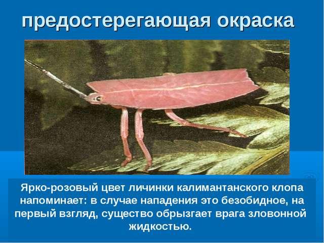 Ярко-розовый цвет личинки калимантанского клопа напоминает: в случае нападени...