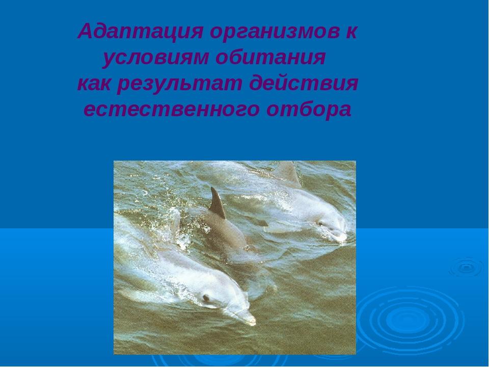 Адаптация организмов к условиям обитания как результат действия естественного...