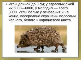 Иглы длиной до 3 см; у взрослых ежей их 5000—6000, у молодых — всего 3000. Иг