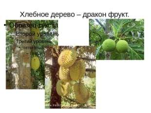Хлебное дерево – дракон фрукт.