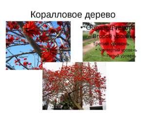 Коралловое дерево