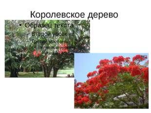Королевское дерево