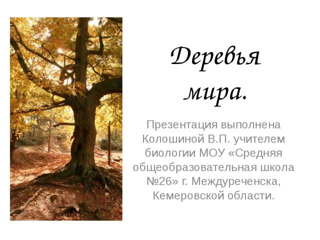 Деревья мира. Презентация выполнена Колошиной В.П. учителем биологии МОУ «Сре...