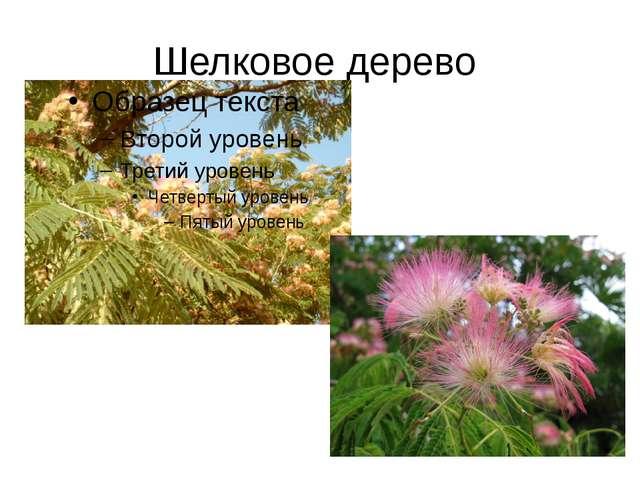Шелковое дерево