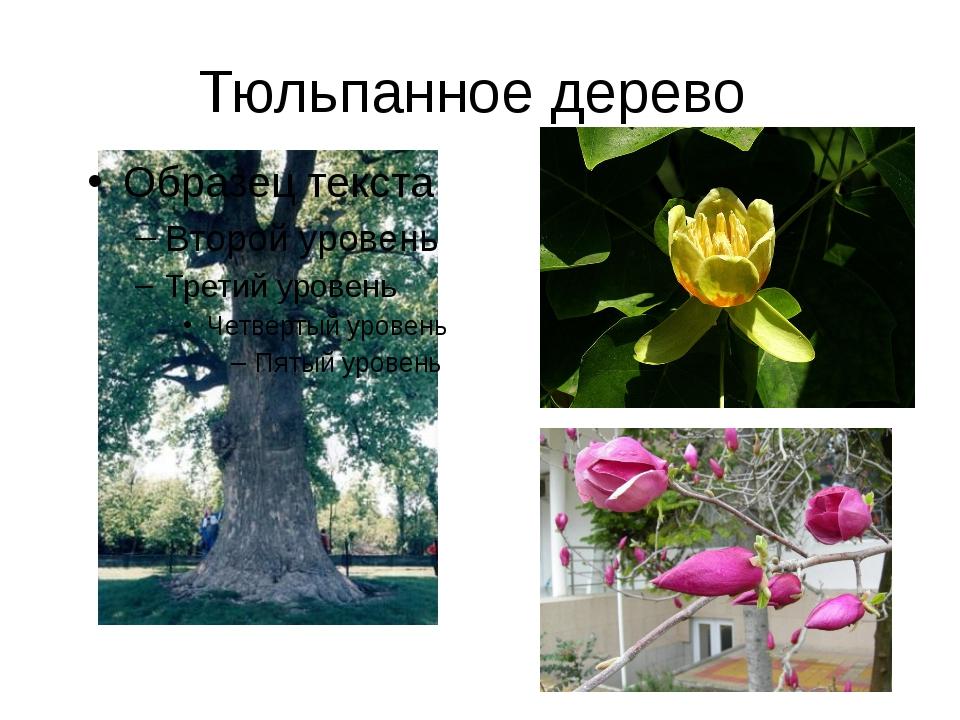 Тюльпанное дерево