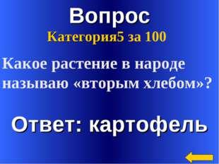 Вопрос Ответ: картофель Категория5 за 100 Какое растение в народе называю «вт