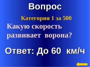 Вопрос Ответ: До 60 км/ч Категория 1 за 500 Какую скорость развивает ворона?